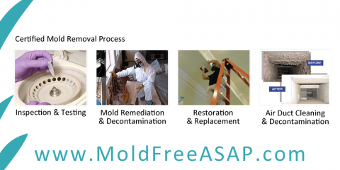 Mold-vs-Mildew