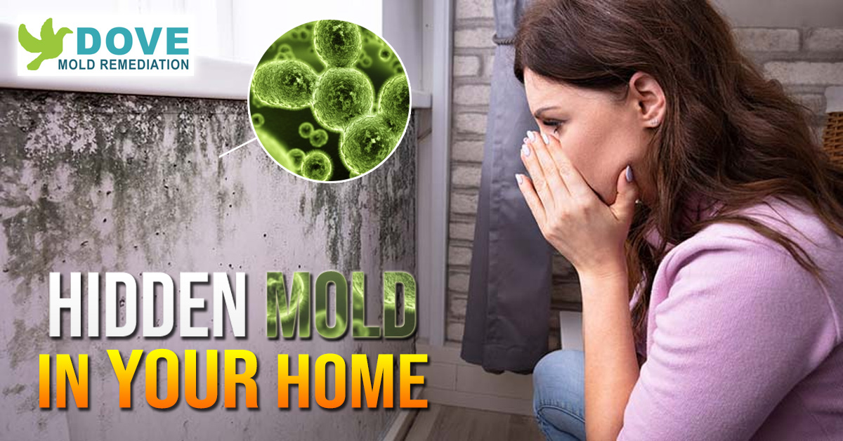 Inspect-for-Mold-Before-you-Sell