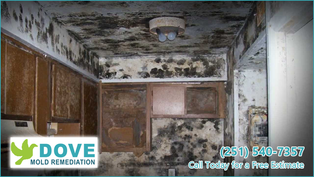 Mold-Remediation-and-Water-Damage-Specialist